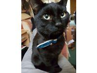 Missing Black Cat - NR2
