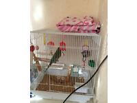 Black,yellow,green budgie with cage,food,ect