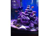 Marine fishes for sell.