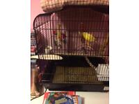 Male canary and cage with accesories
