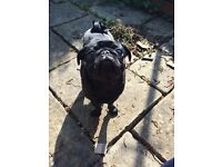 A HOUSE FOR ME AND MY PUG?! URGENT