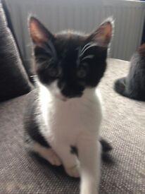 Kitten.. little girl.