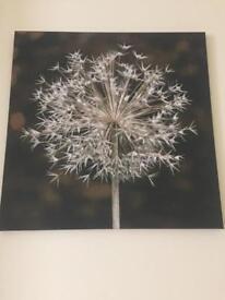 Dandelion canvas from NEXT