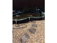 Huge fibreglass fish pond. Will consider swap for small. Pond above ground or under