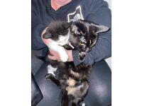 2 male kittens ready pls read
