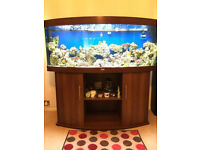 4ft Juwel Vision 260 dark marine tropical cold fish tank aquarium (delivery installation)