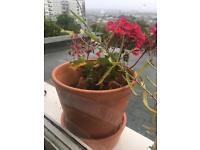 3 terra cota plant pots with saucers
