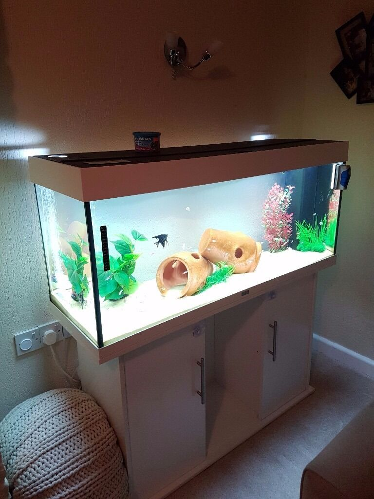 Cabinet aquarium fish tank tropical - 240 Litre Tropical Fish Tank Immaculate Condition White Cabinet And Tank