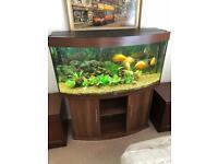 Juwel Vision 260 Aquarium and Cabinet