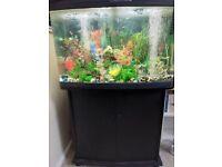 Whole tropical fish tank set up