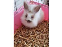12 week old baby rabbit
