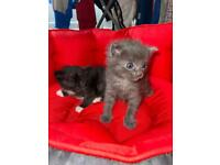 Kittens !!ALL RESERVED !!