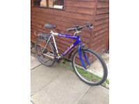 2 Adult & girl bikes