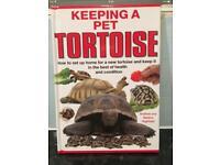 How To Keep A Tortoise