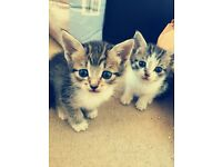 Beautiful Kittens For Sale(can deliver)