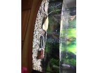 Full typical fish tank