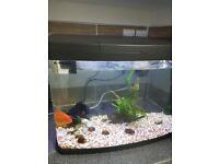 64l Aquarium led+canister filter+2 goldfish +accessories