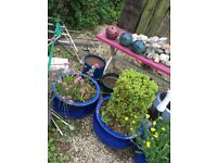 Selection of Plant Pots for sale