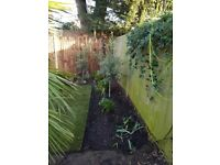 Friendly Gardening and Landscaping - No job too small -Petersham-Richmond-Ham-Surbiton-Norbiton
