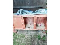 Female rabbit and hutch Look!!!