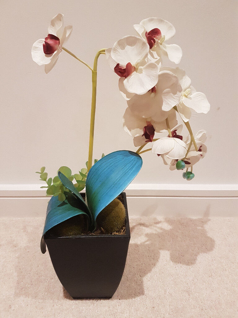 Real Look Potted Fake Orchid In Bristol City Centre Bristol Gumtree