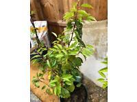 8 shrubs