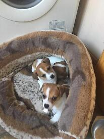 Pups loving homes only