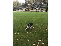 Lead the way- dog walking service