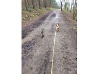 Dog Walker/Pet Sitter in Newcastle