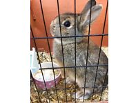 Female rabbit for sale with hutch