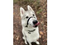 Dog walker - Your Pets our Passion - Dog walking