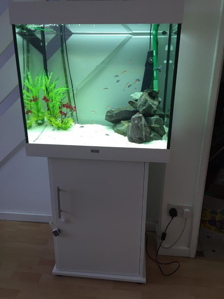 Juwel lido 200 in white complete with external filter in for 200 gallon fish tank dimensions