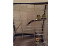 Kakariki parrots , bonded pair , with cage £70 .