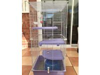 2 female rats for sale sisters 7 months old and cage