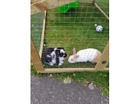 Rabbits and cage for sale both male