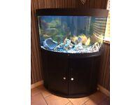 Jewel 190 Aquarium