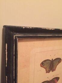 Pair of Prints of Butterflies