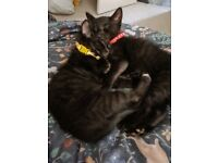 Two 12 week old kittens looking for loving family home