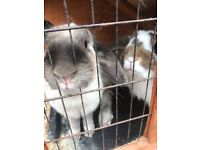 2 indoor rabbits looking for their new home