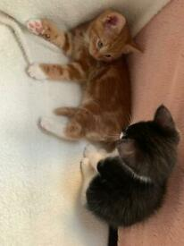 Gorgeous kittens for sale West London