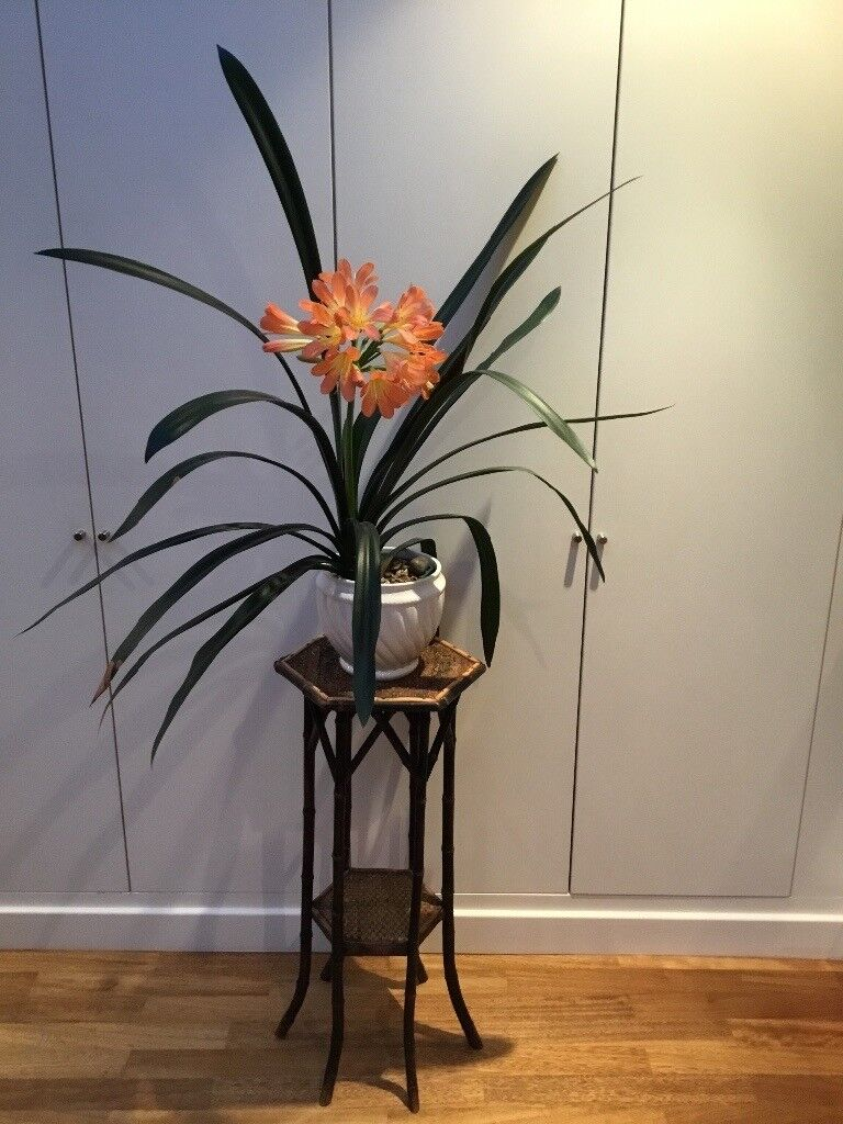 Victorian bamboo and rattan plant stand