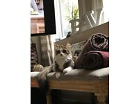 Gorgeous cat needs a loving new home