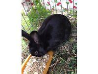 Rabbit - Now Free!!