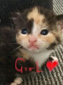 5x beautiful kittens, 3 weeks old