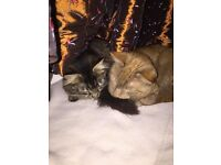 Two 2 year old (neutered) cats - best friends and need a new home
