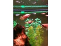 Fish Tank Cleaning! Have A Dirty Aquarium? Need Help With Maintenance? I Can Clean It For You!