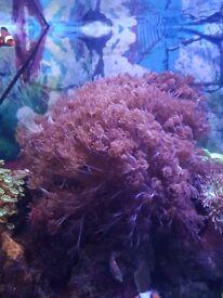 Ro water marine fish tank