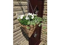 Wicker cone hanging baskets
