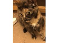 2 cats need rehoming