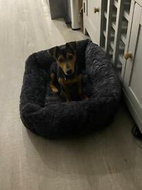 Jack Russell mix looking for new home